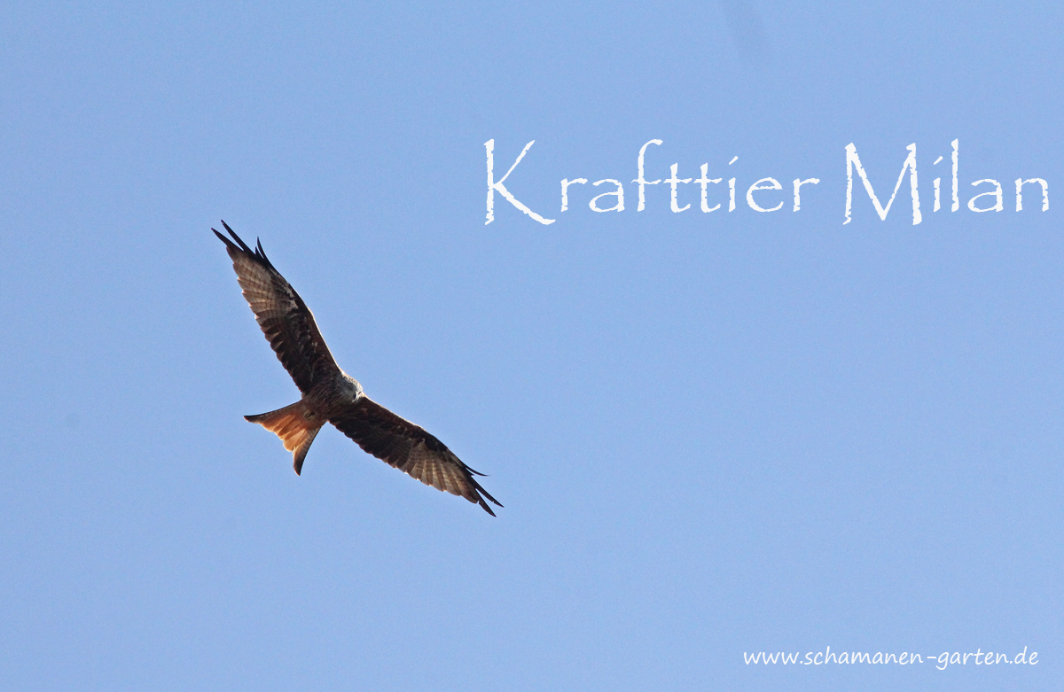 Krafttier Milan
