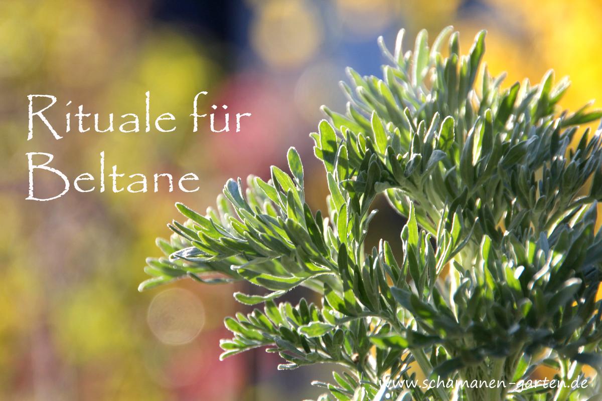 Beltane, Hexennacht, Walpurgisnacht, Rituale, Schamane, im Bild: Wermut im Frühjahr