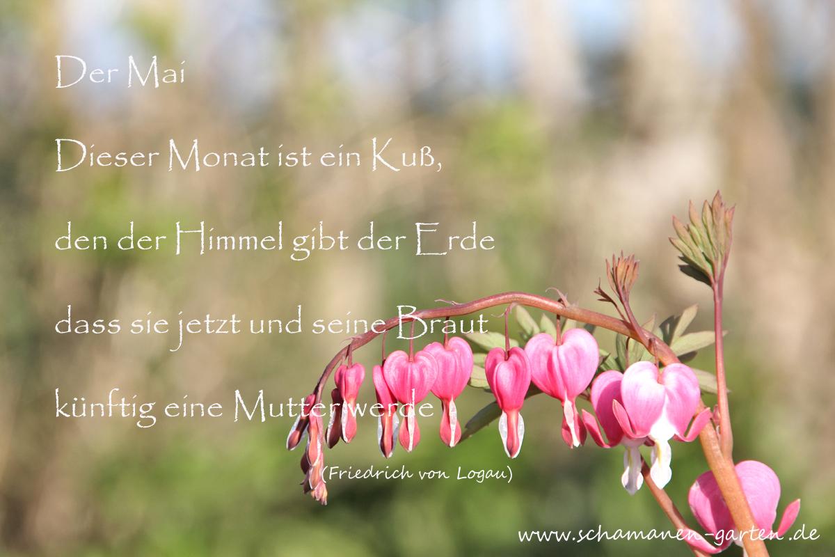 Der Mai, Logau, Gedicht, Blume, Tränendes Herz