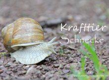 Krafttier Schnecke, Weinbergschnecke im Bild