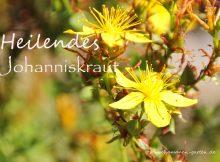 Johanneskraut Heilwirkung, Foto, Nahaufnahme Blüten