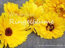 Ringelblume, Heilwirkung, Blütenblätter