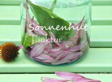 Sonnenhut-Tinktur, Echinacea, Heilwirkung