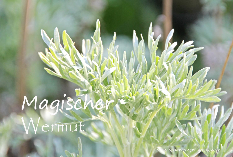 Heilpflanze Wermut, Heilkraft Wermut, magisch