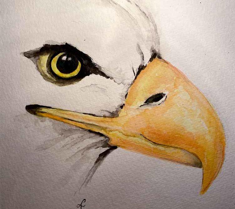Krafttier Adler, Schamanisch, Bedeutung